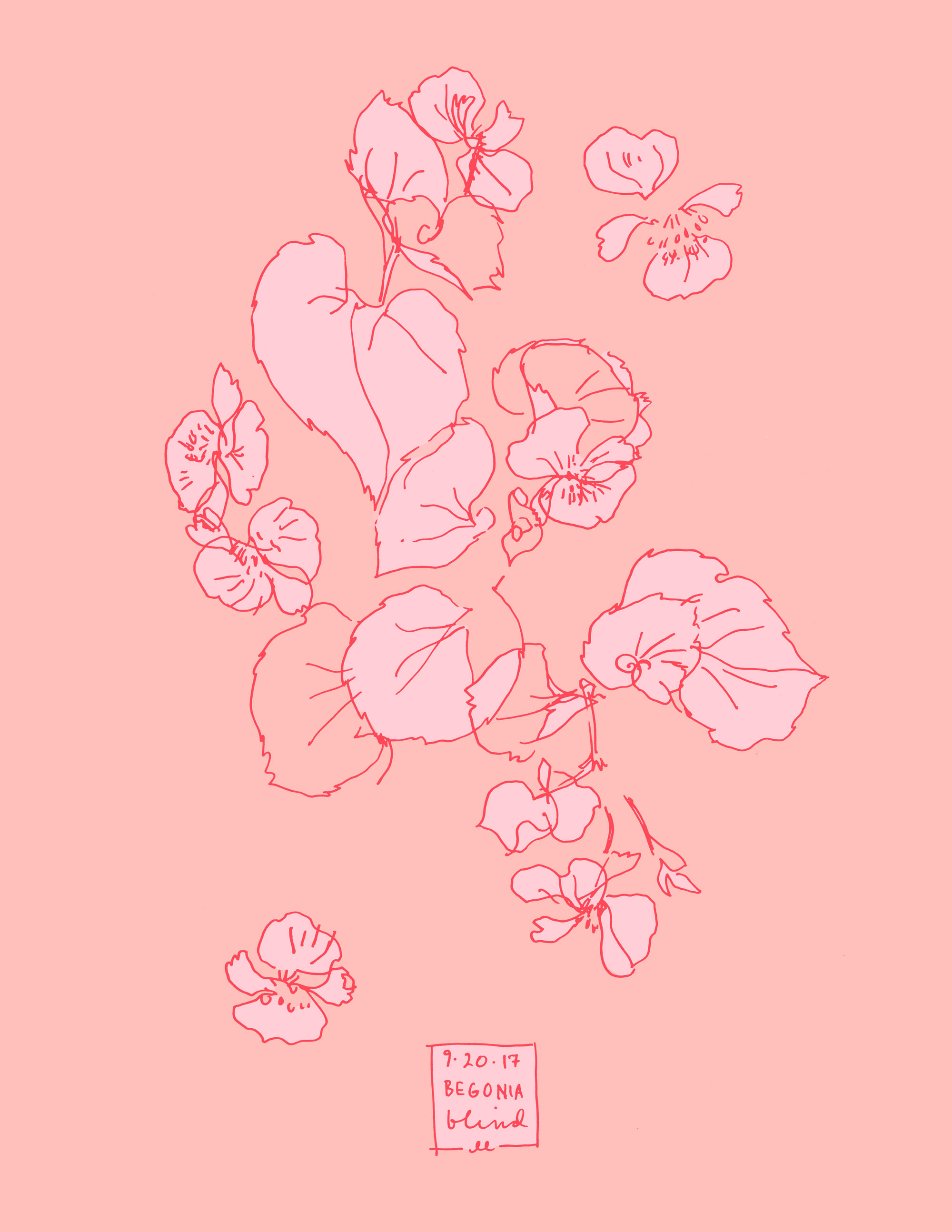 Begonia botanical line color illustration