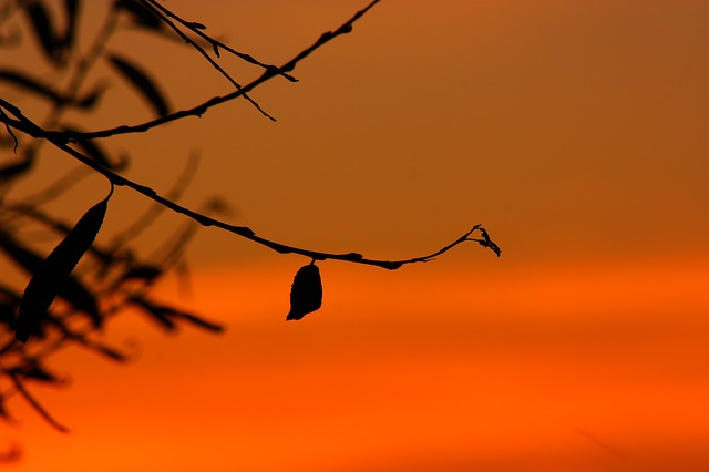 silhouette-251693_640.jpg