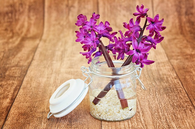 hyacinth-747131_640.jpg