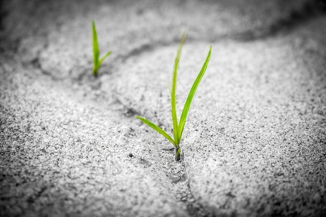 grass-1913167_640.jpg