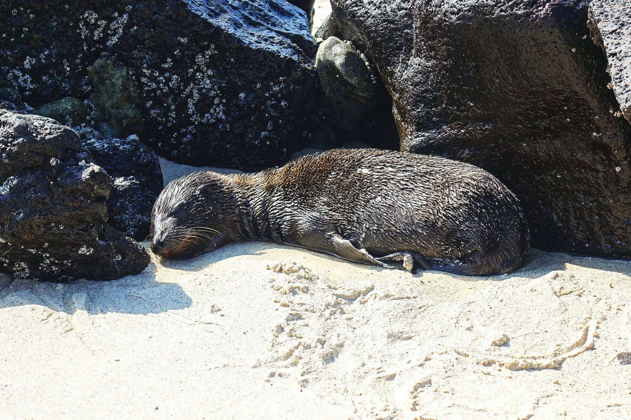 A baby seal nestled among the rocks.