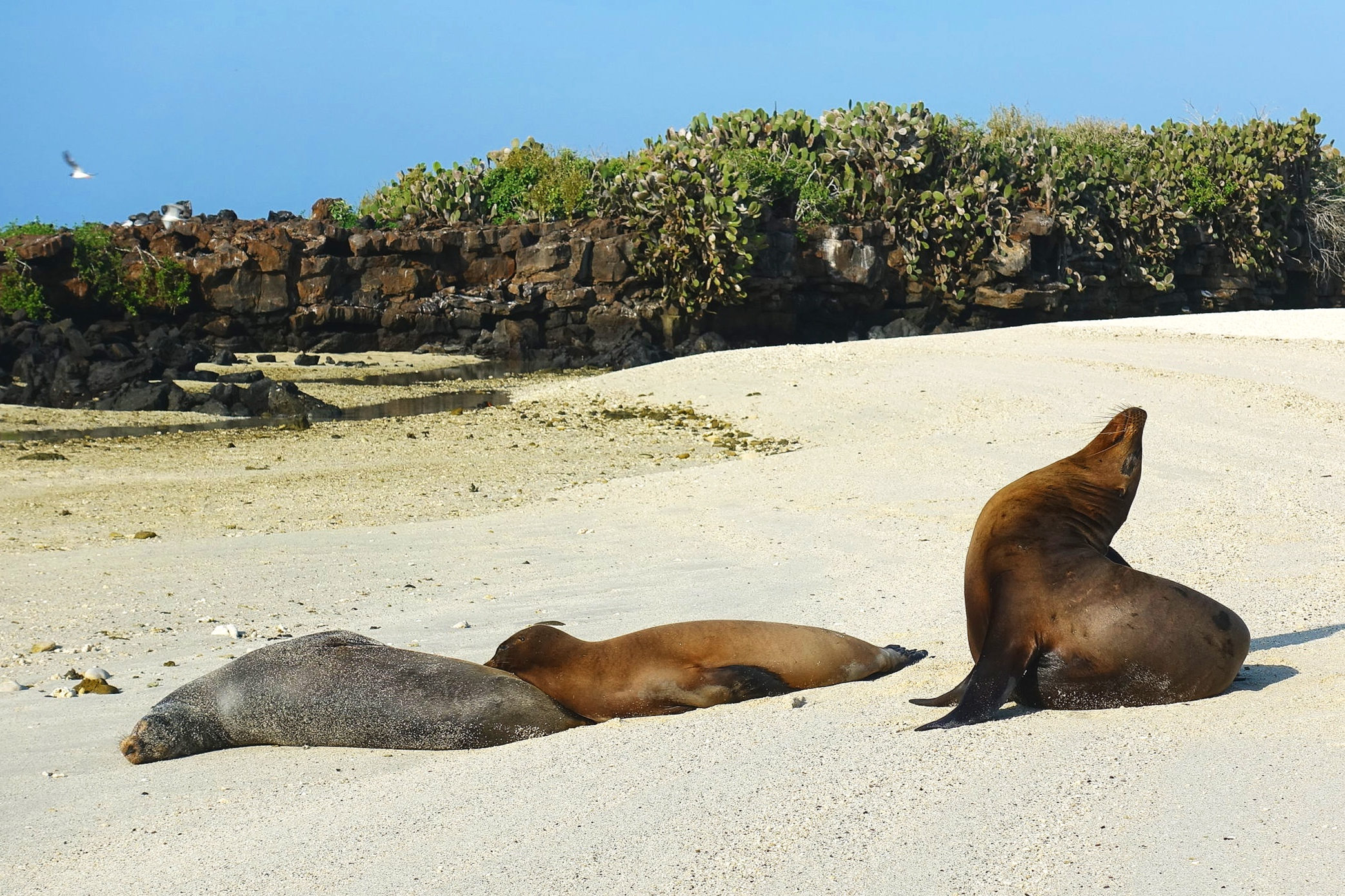 The first of many sea-lions.