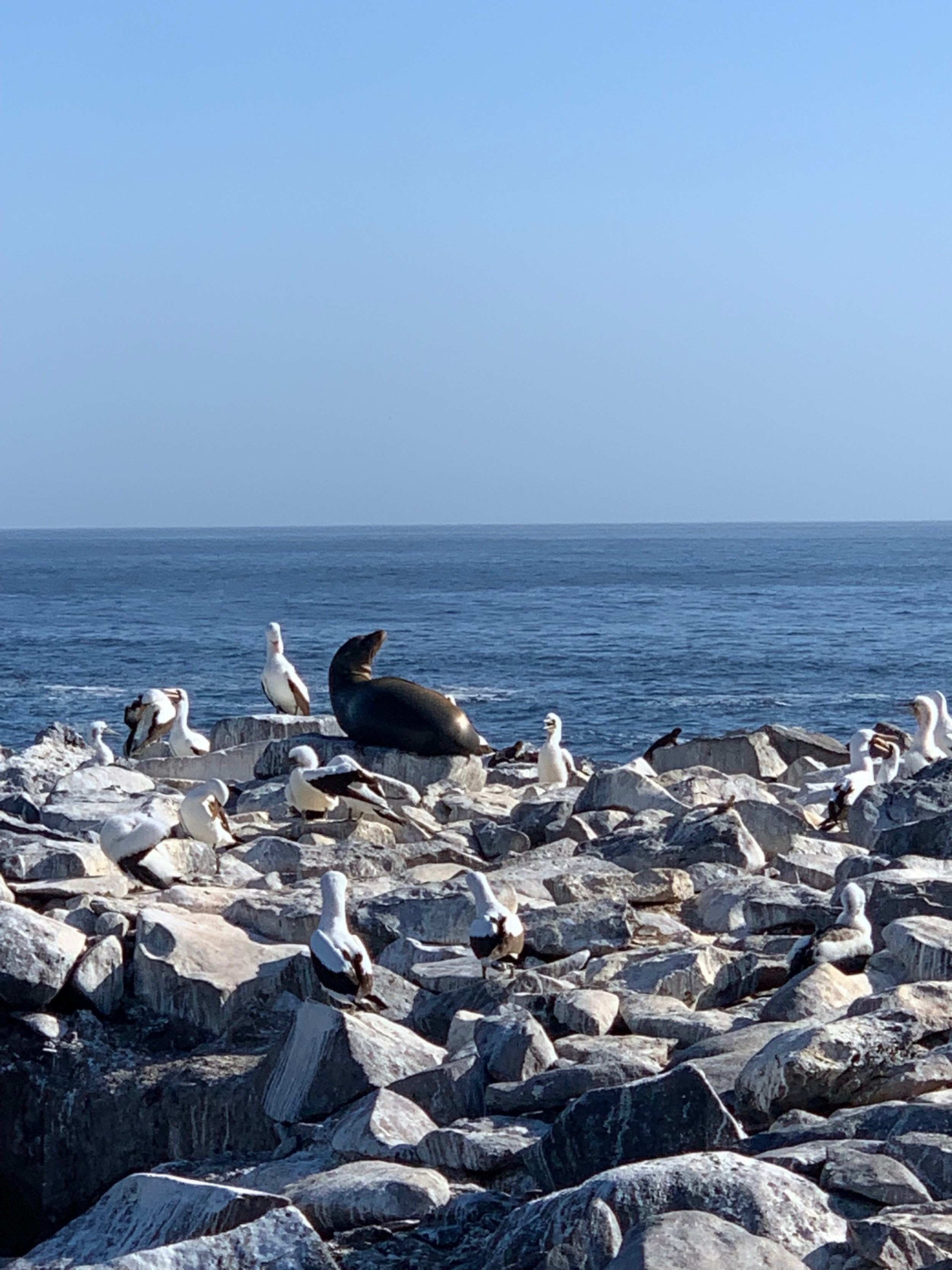 Birds and sea-lions everywhere.
