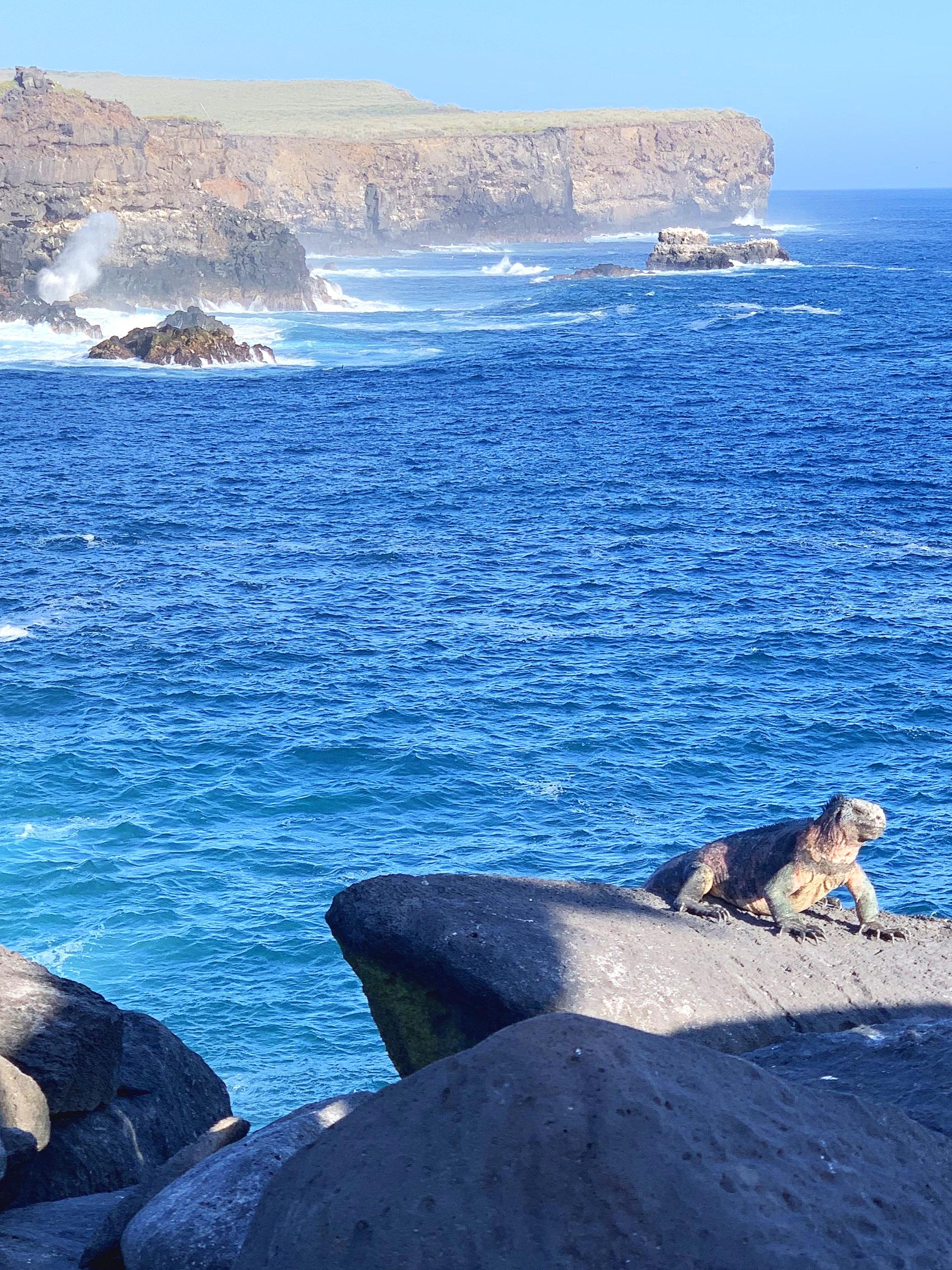 The coastline might look slightly Cornish but the wildlife definitely isn't!