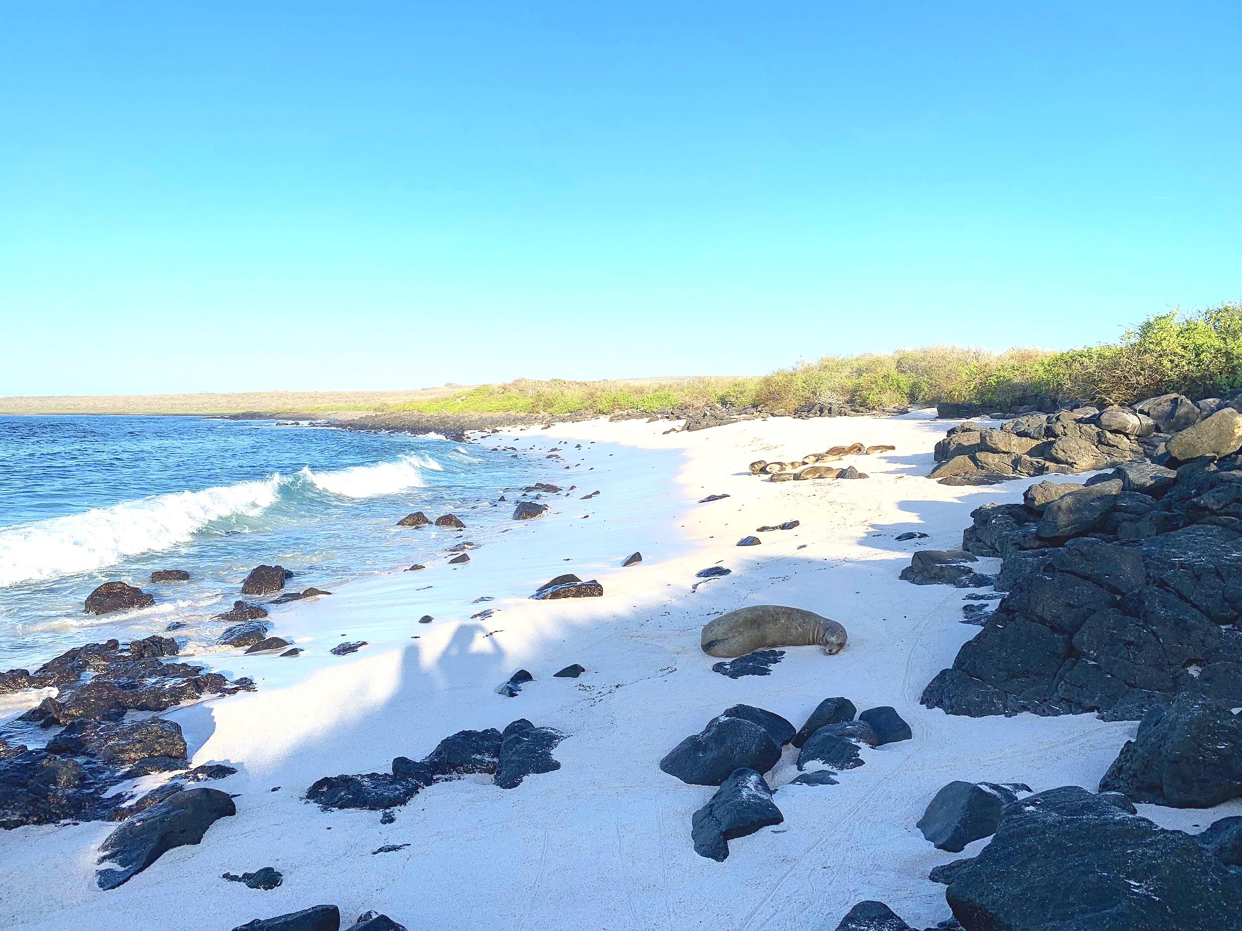Sea-lion beach.