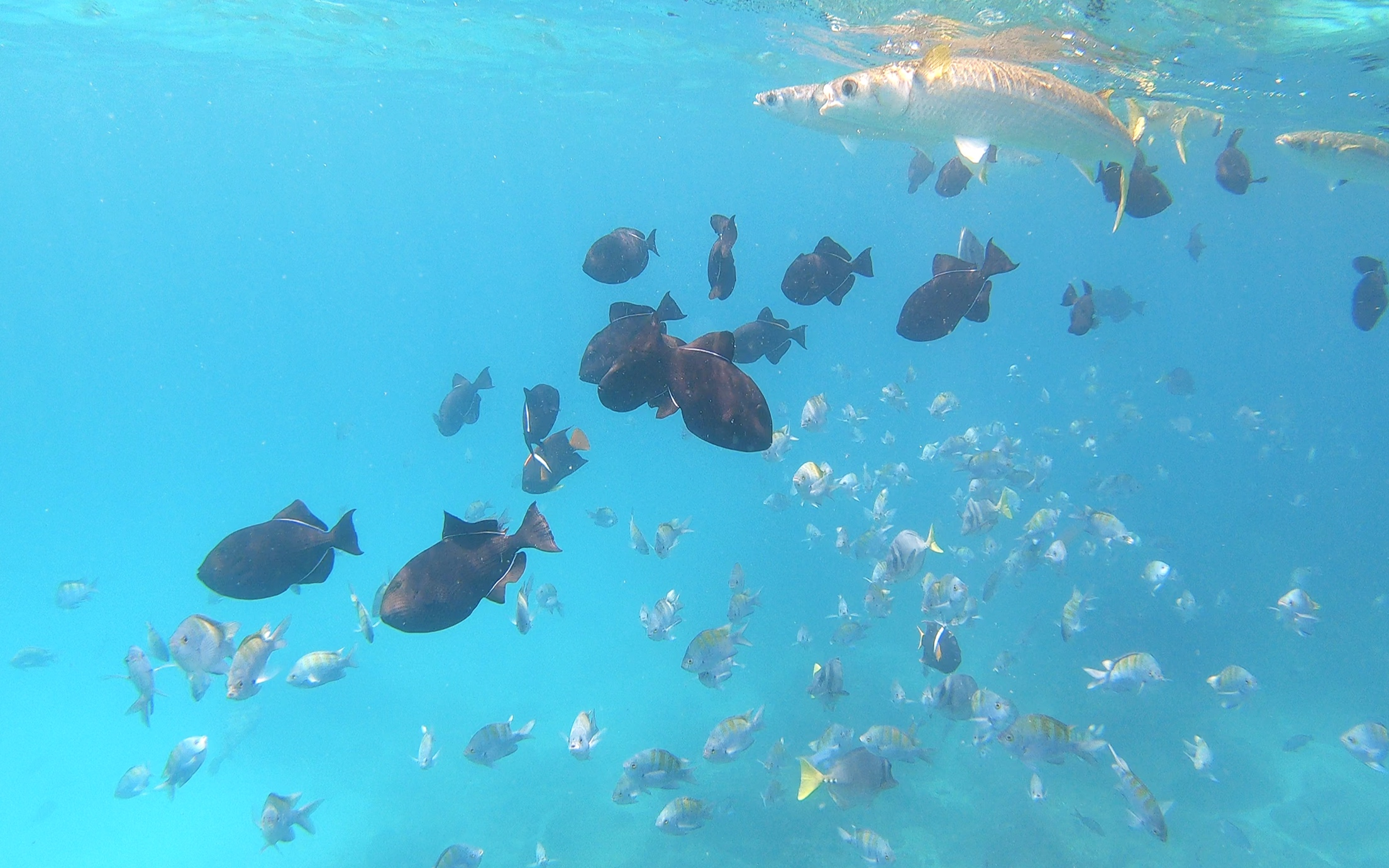 Our first day deep sea snorkelling.