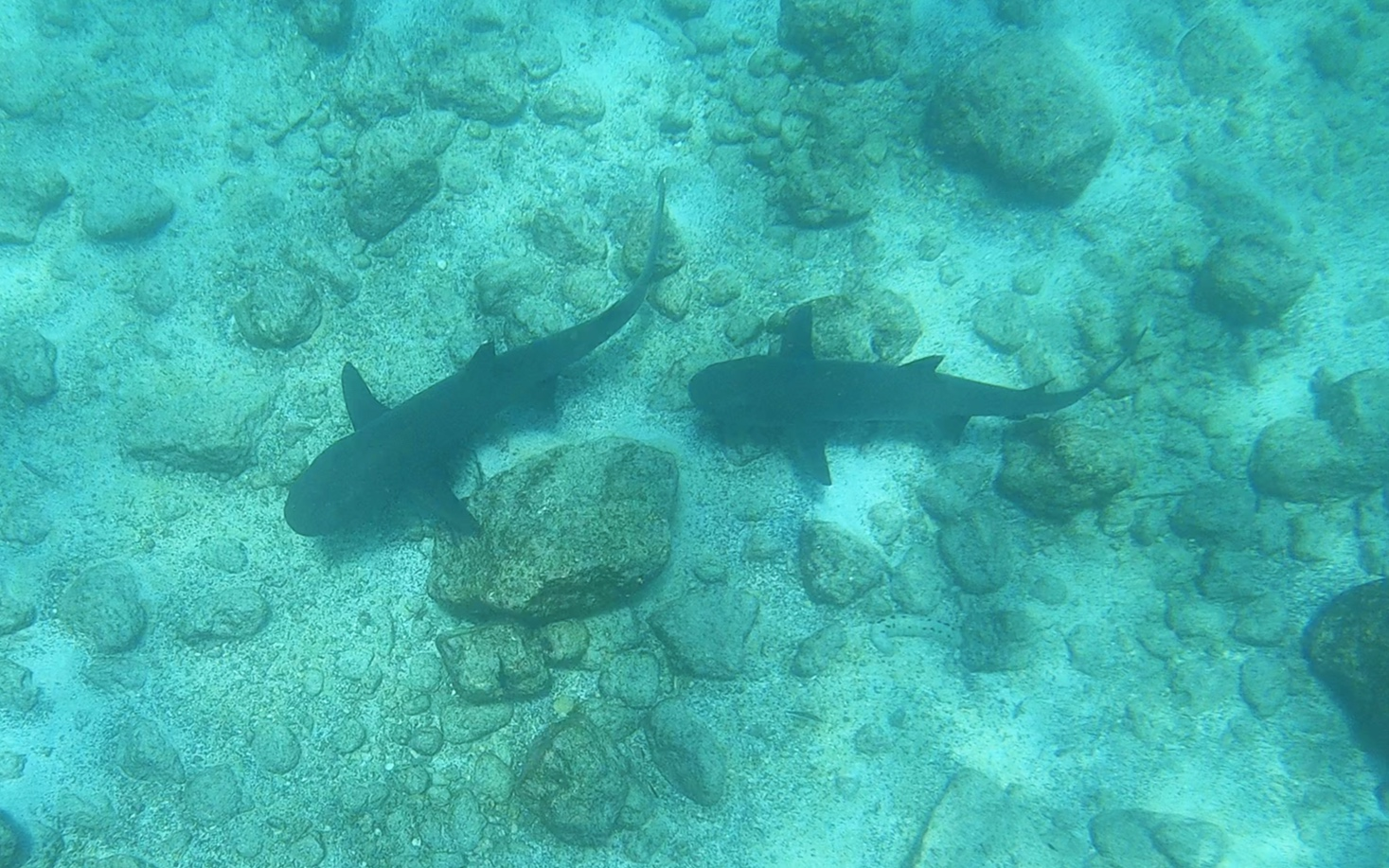 We swam with sharks.