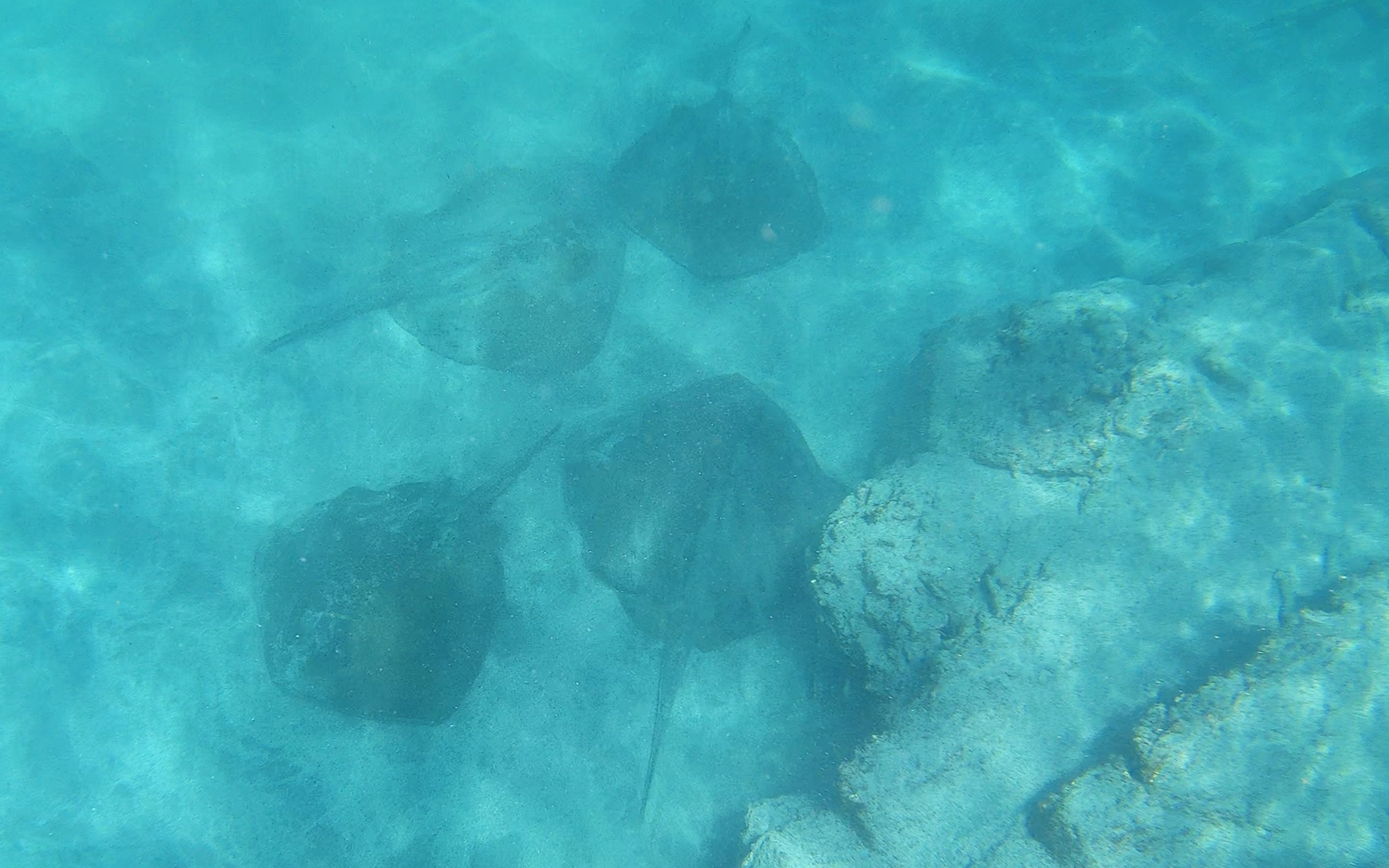 And a group of rays…..
