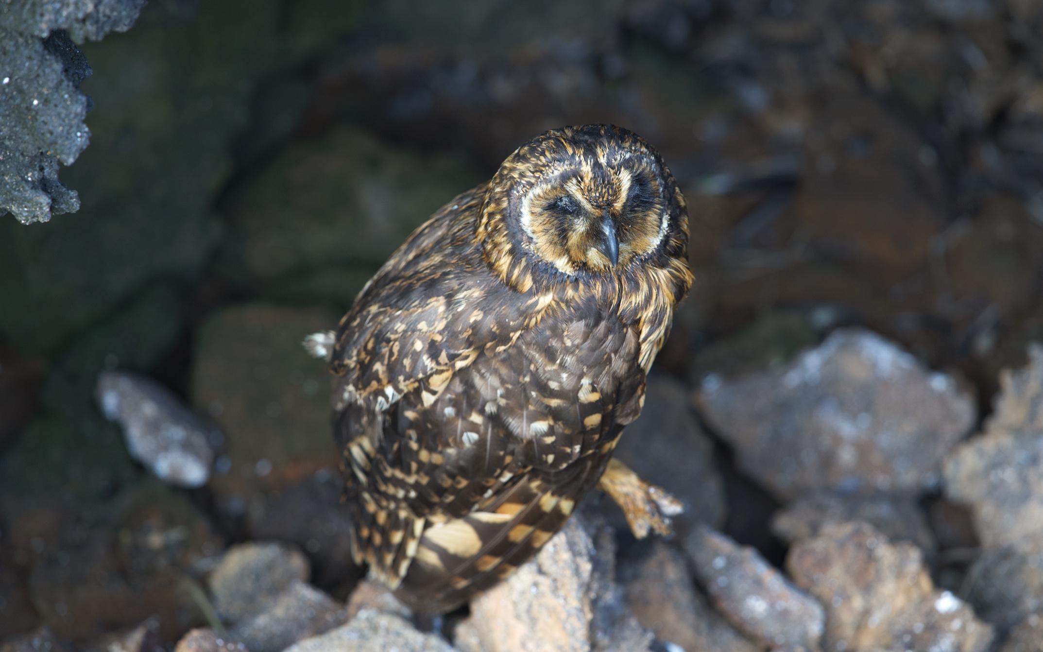 …..like this beautiful owl.