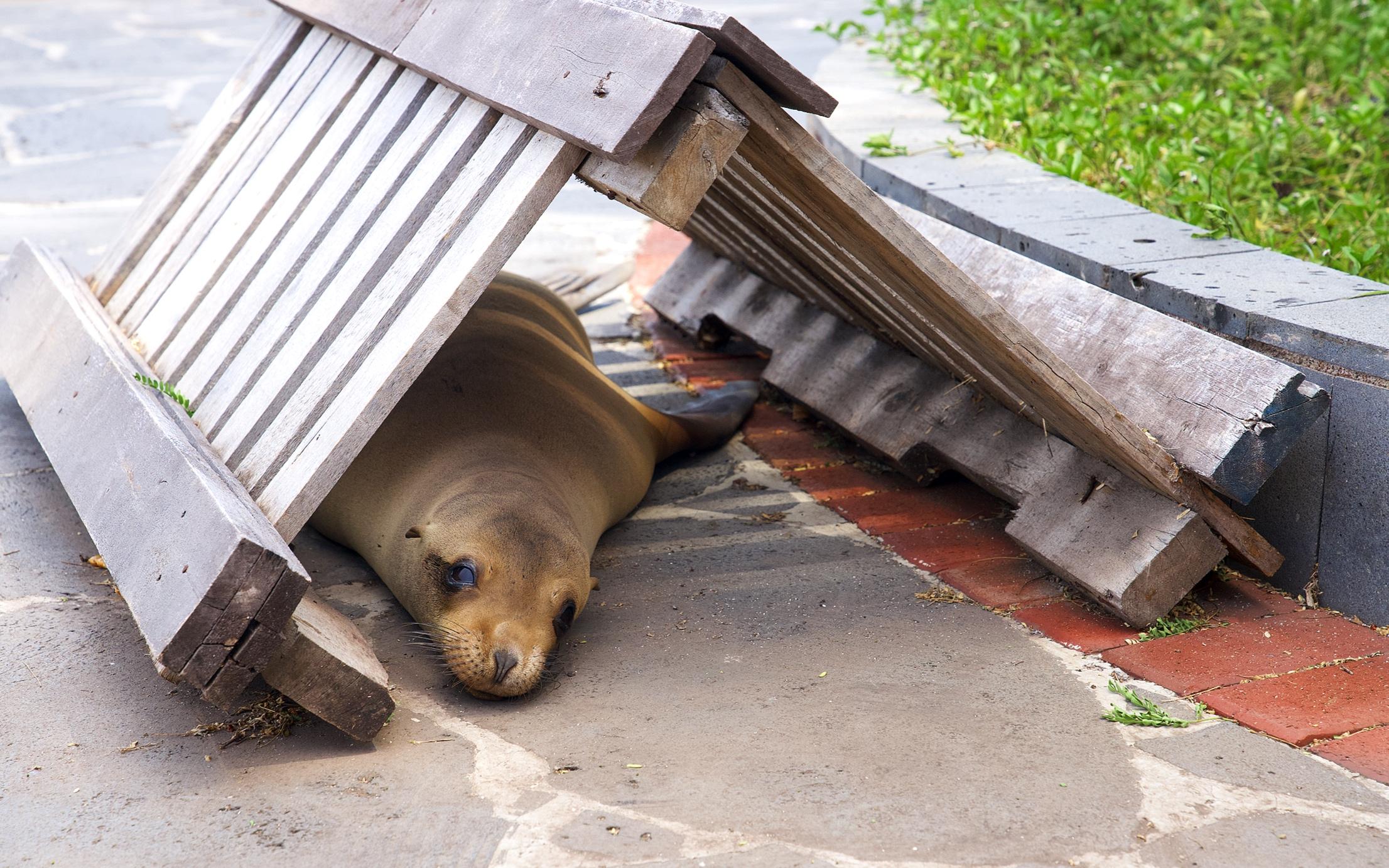 Sea-lion hiding place.