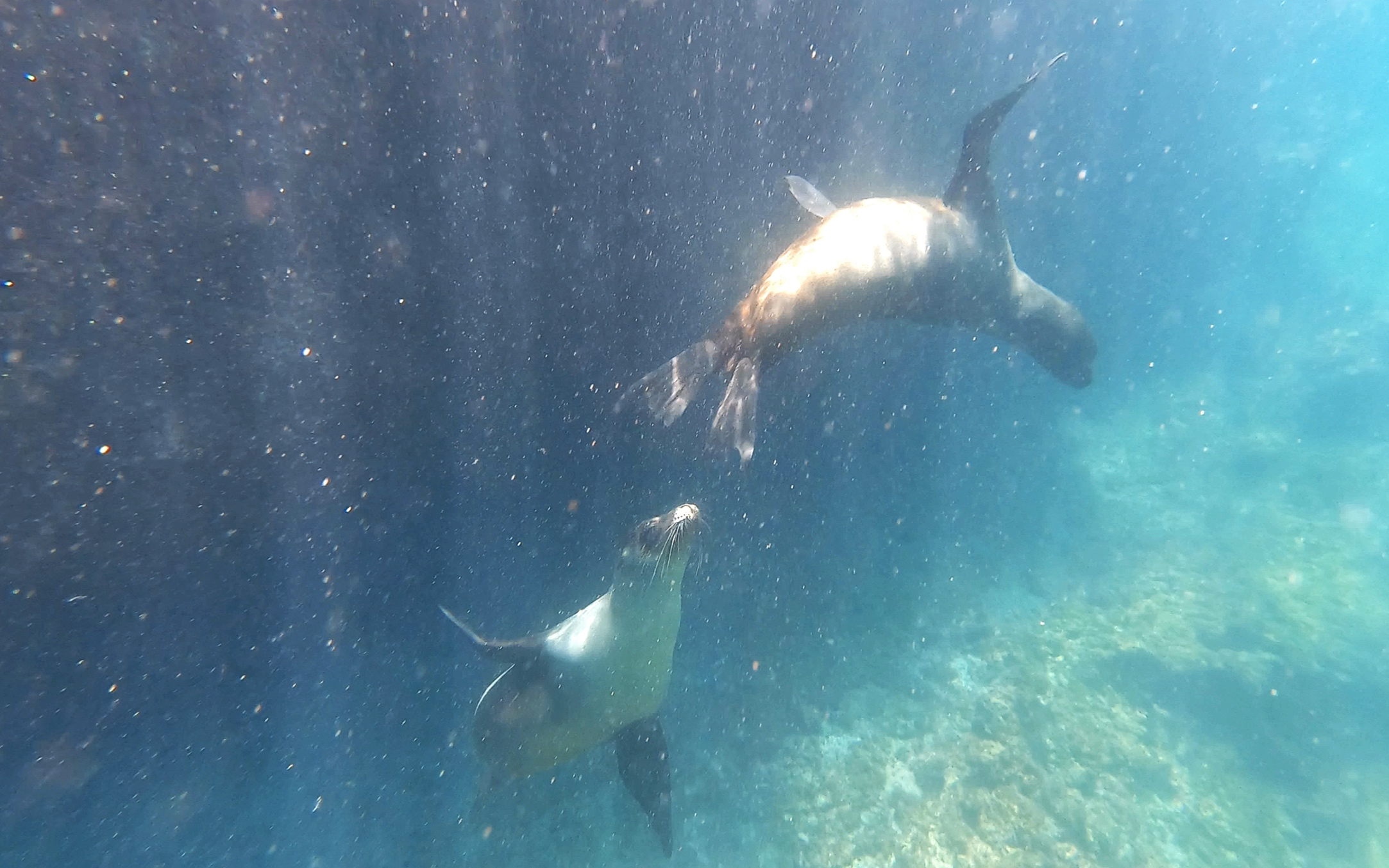 Frolicking in the water with sea-lions.