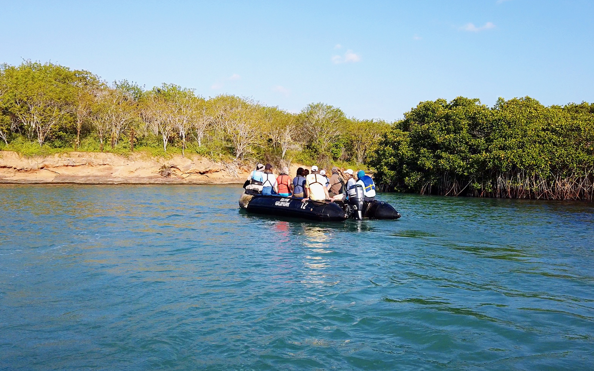 This afternoons zodiac cruise around the mangrove lagoons - a nursery for baby sharks.