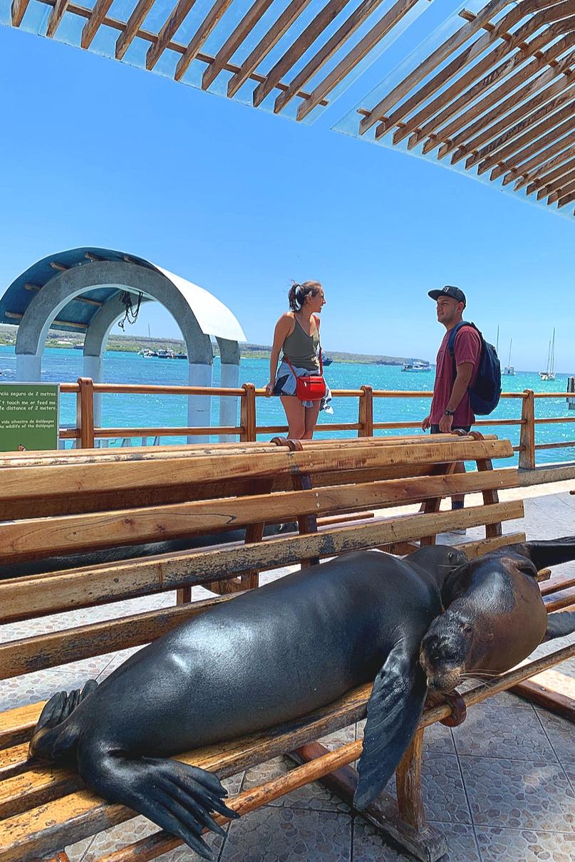Sea-lions rule in Puerto Ayora.