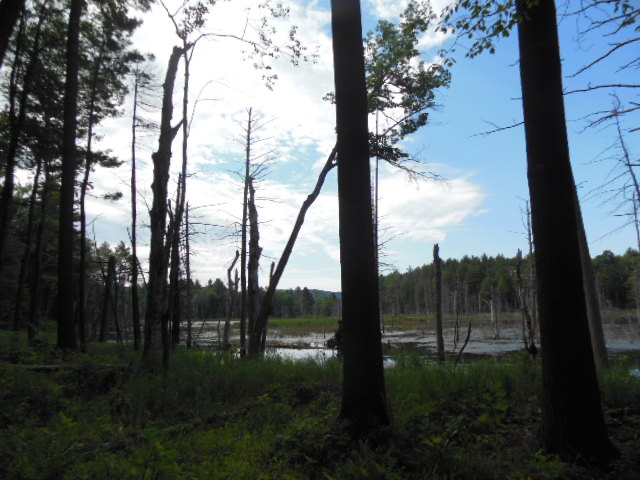 Beaver Pond from Aug. 1 Cavendish Hike, photograph by Bob Naess