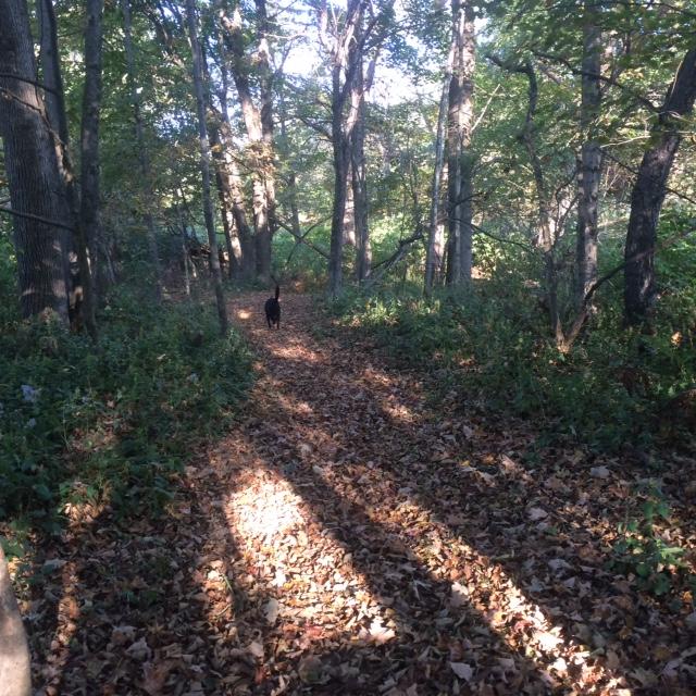 Ida on trail.JPG