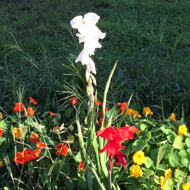 Flower use.JPG