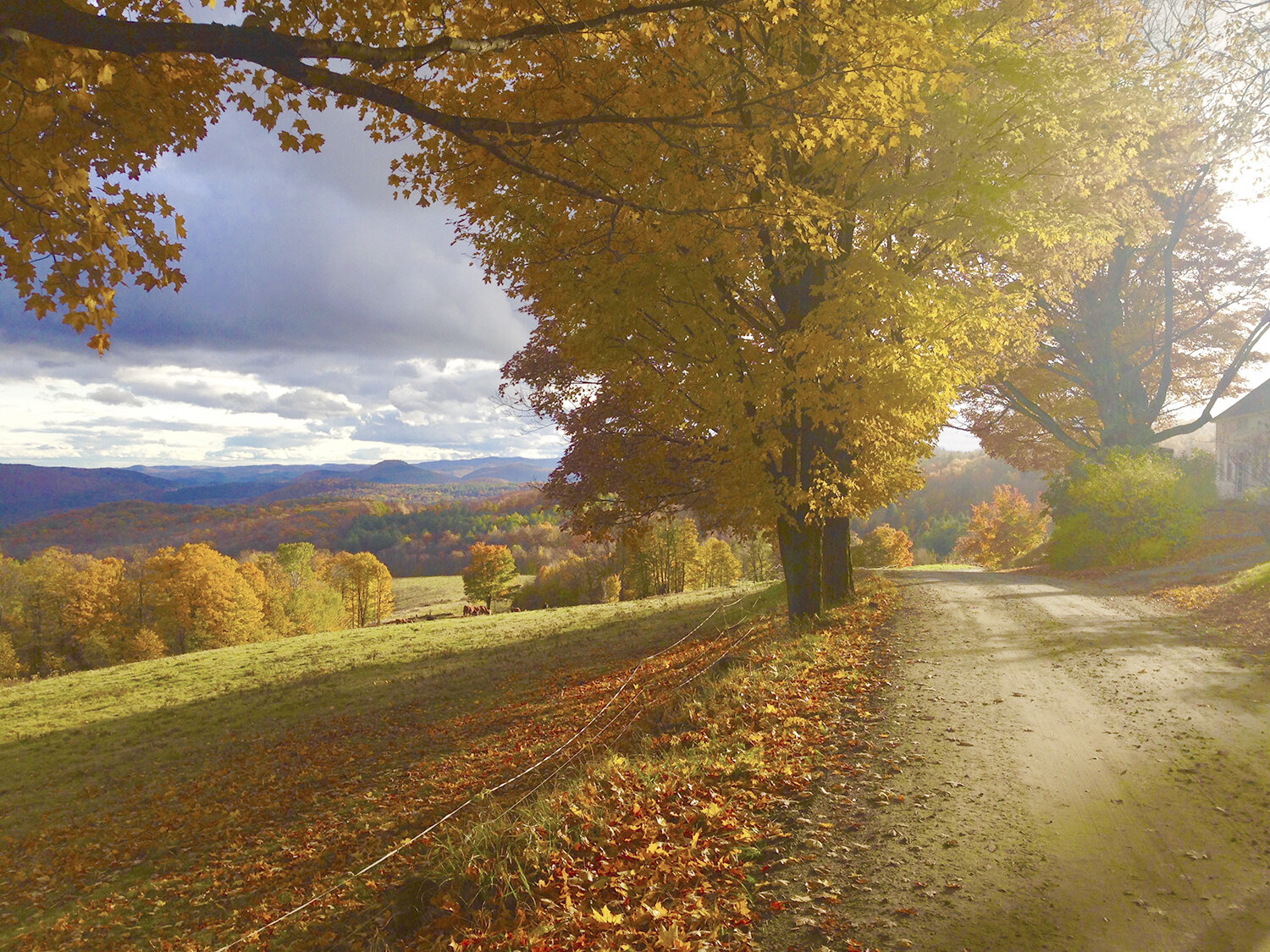 Pretty-fall-colors-on-a-Vermont-dirt-road.-Photo-by-Shawntae-Stillwell.jpg