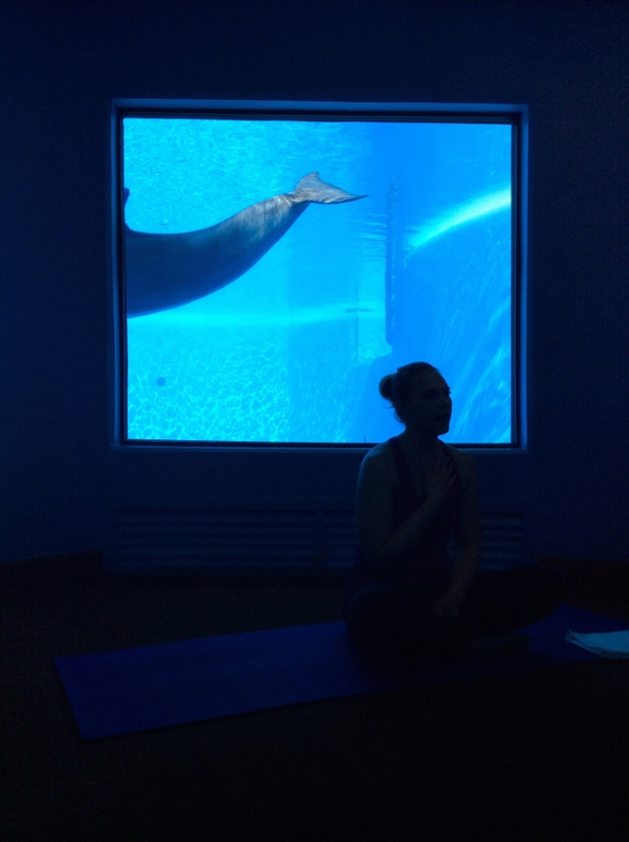 The room where yoga with Dolphins takes place in the Mirage Hotel