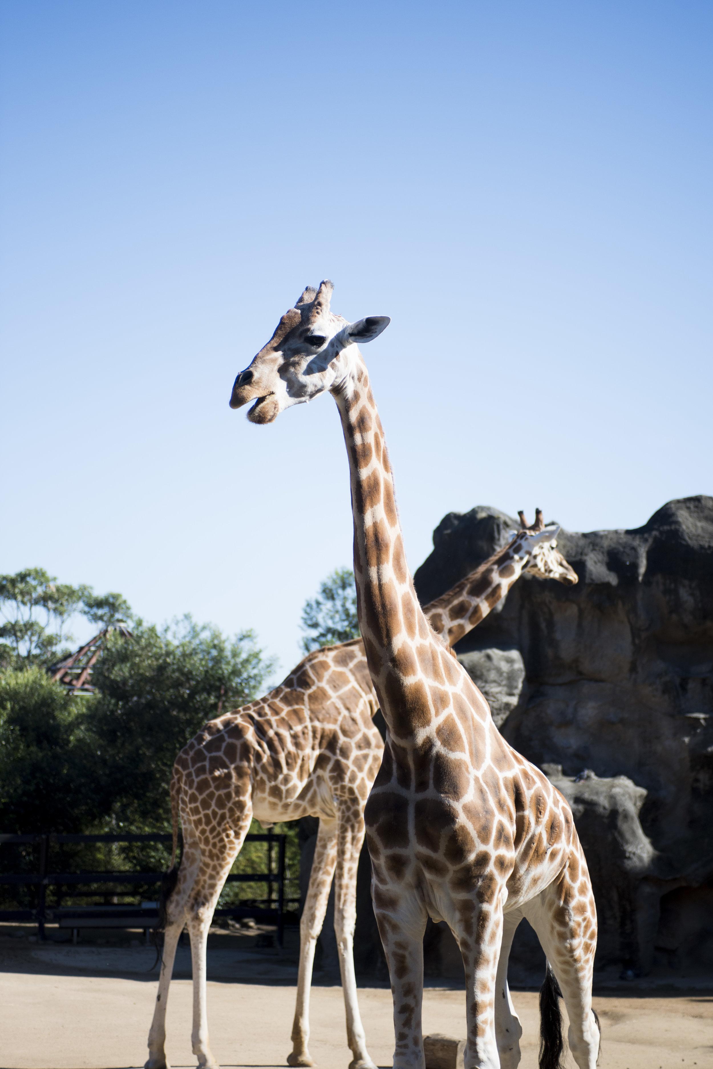 Day2_Zoo (10).JPG