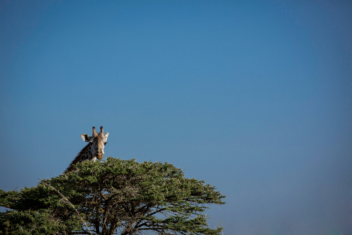 Kenya_Nairobi_NationalPark-1526.jpg
