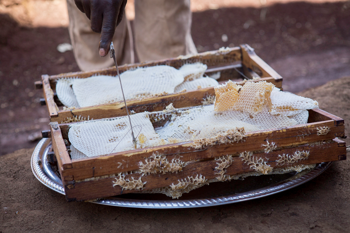 WEEMAinternational_Beekeeping-5036.jpg