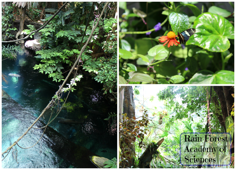 Inside the Rain Forest Exhibit 3 Stories tall! So lush and full of life.