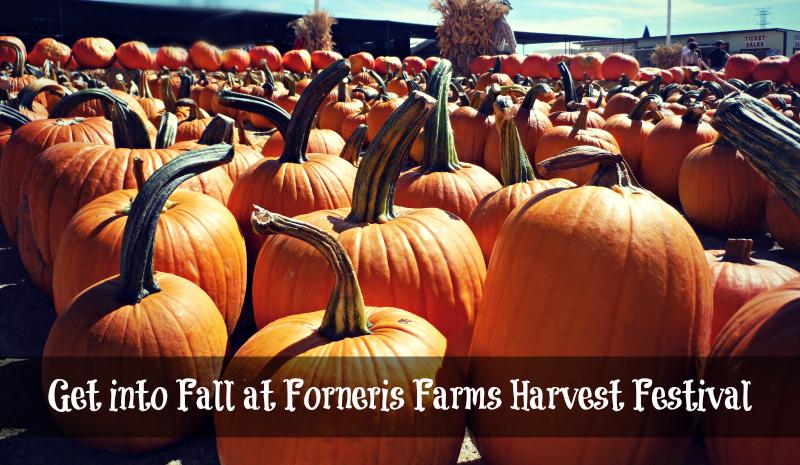 Forneris Farms Harvest Festival