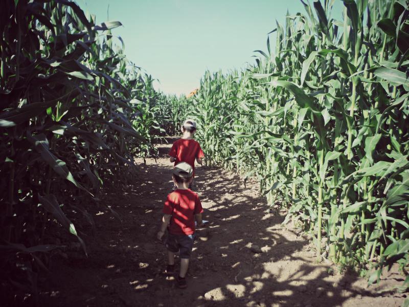 Forneris Farms Corn Maze 00.jpg