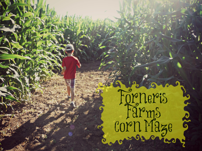 Forneris Farms Corn Maze.jpg