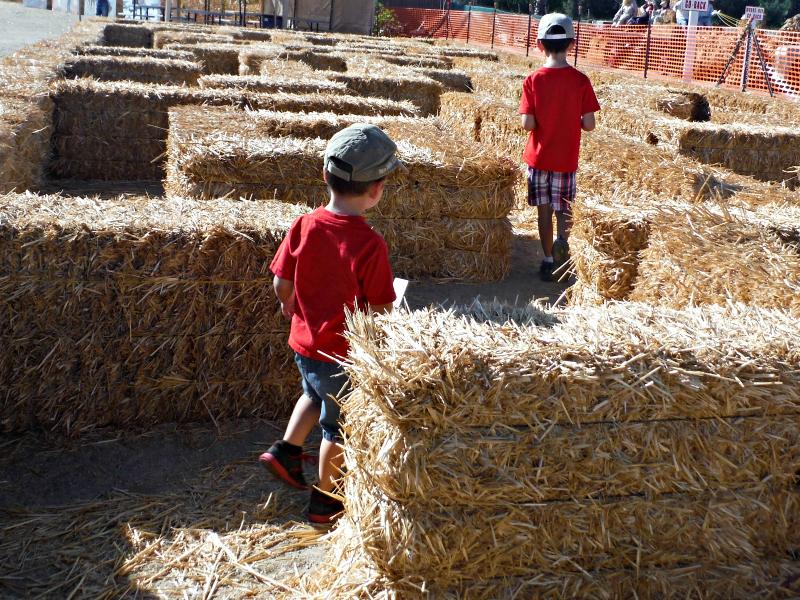 Forneris Farms Harvest Festival 00.jpg