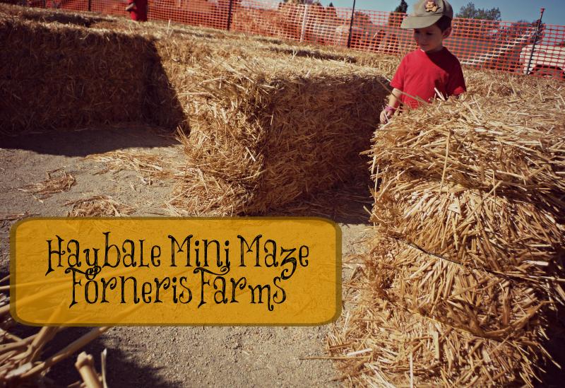 Forneris Farms Harvest Festival 01.jpg