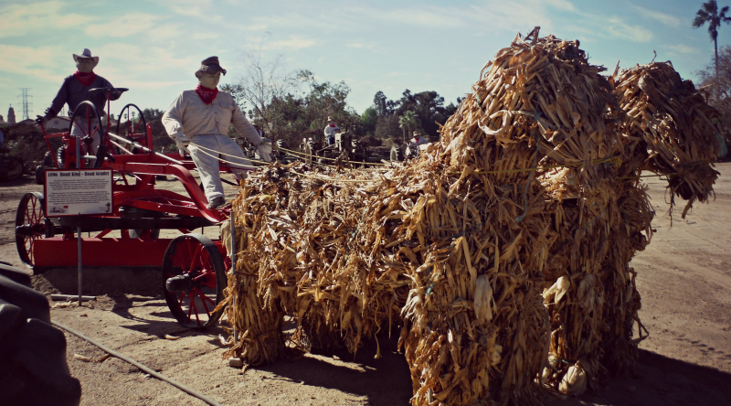 Forneris Farms Harvest Festival 05.jpg