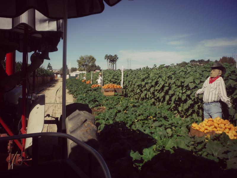 Forneris Farms Harvest Festival 06.jpg
