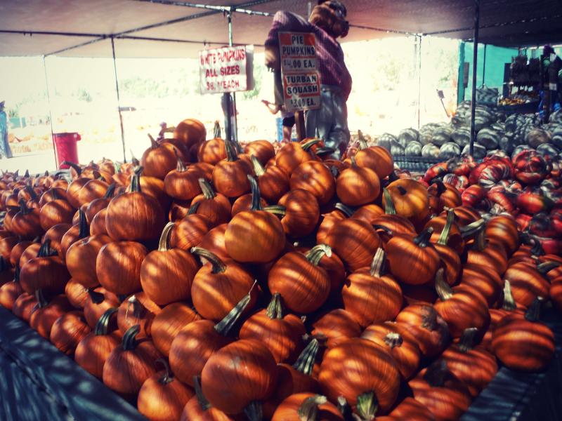 Forneris Farms Harvest Festival 23.jpg