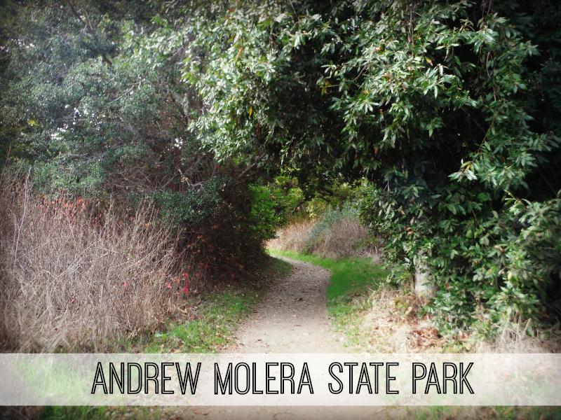 Andrew Molera State Park (3).JPG