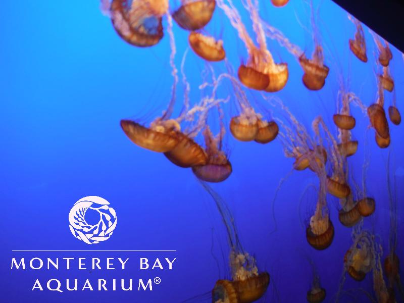 Monterey Bay Aquarium (45).JPG