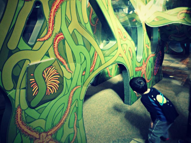 Monterey Bay Aquarium (6).JPG