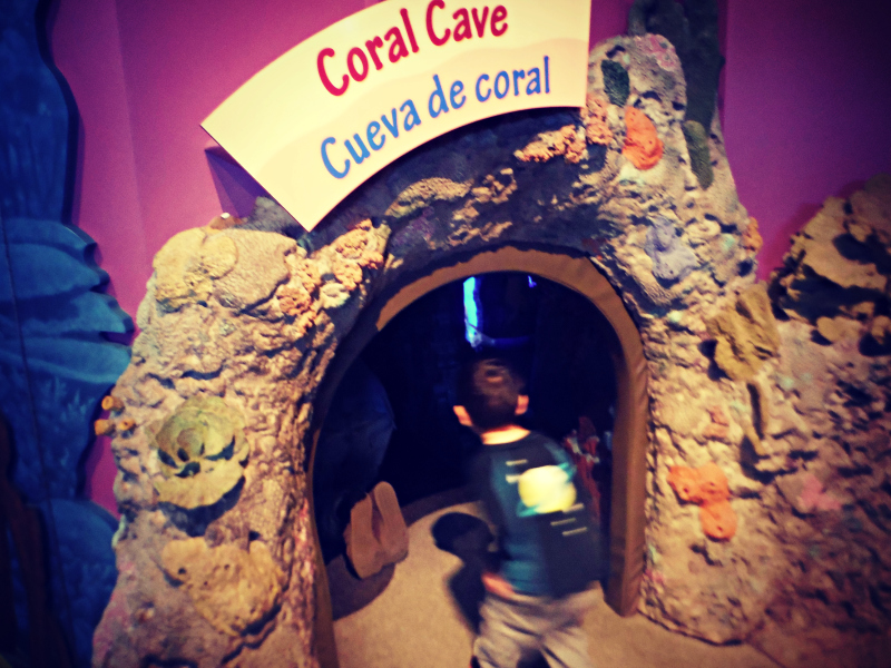 Monterey Bay Aquarium (11).JPG