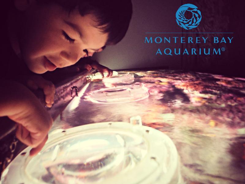 Monterey Bay Aquarium (20).JPG