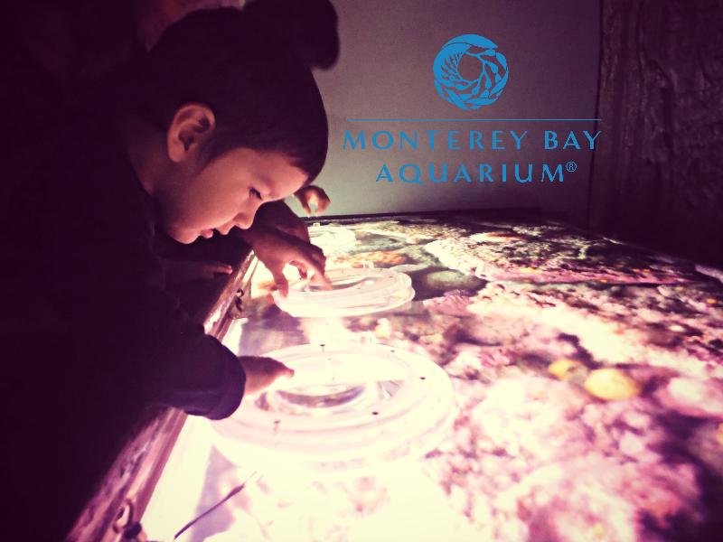 Monterey Bay Aquarium (22).JPG
