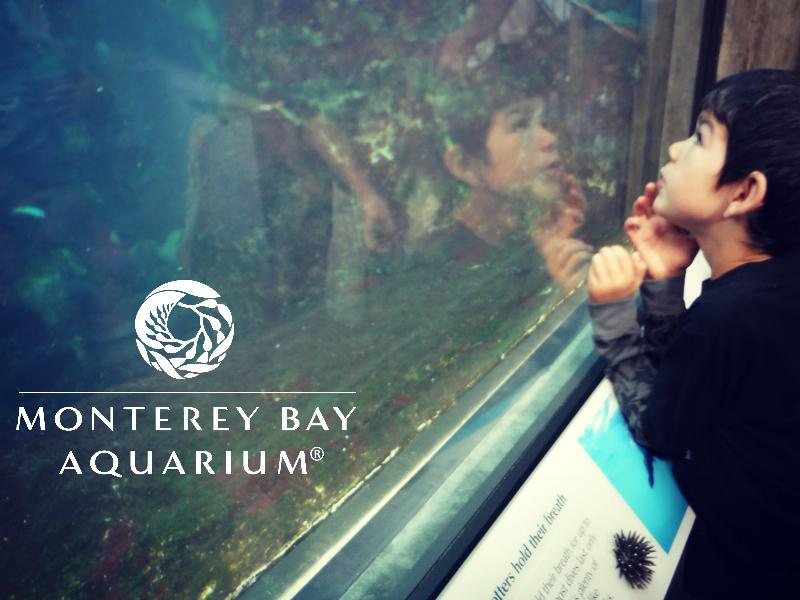 Monterey Bay Aquarium (32).JPG