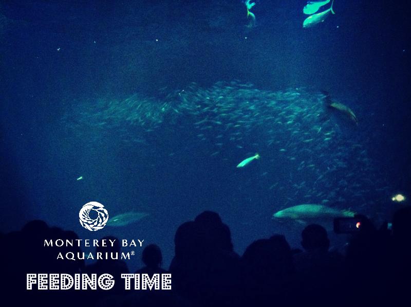 Monterey Bay Aquarium (60.jpg