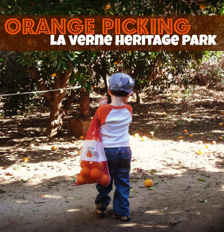 Orange Picking at La Verne Heritage Park