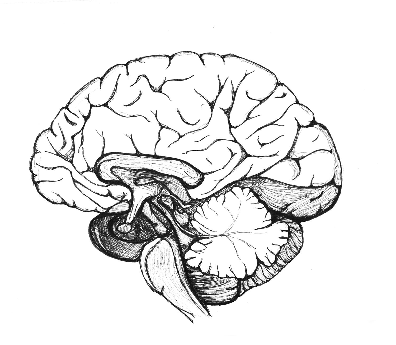 Brain_Sketch.jpg
