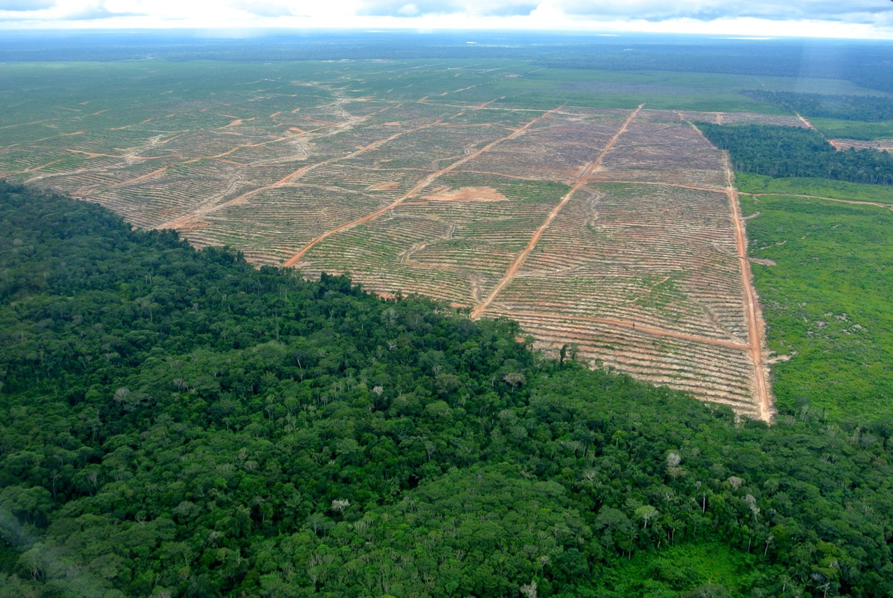 Photo credit: Mathias Rittgerott / Rainforest Rescue.