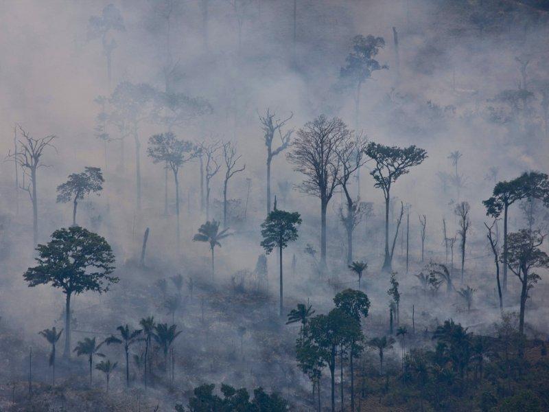 Foto av: Greenpeace / Daniel Beltrá