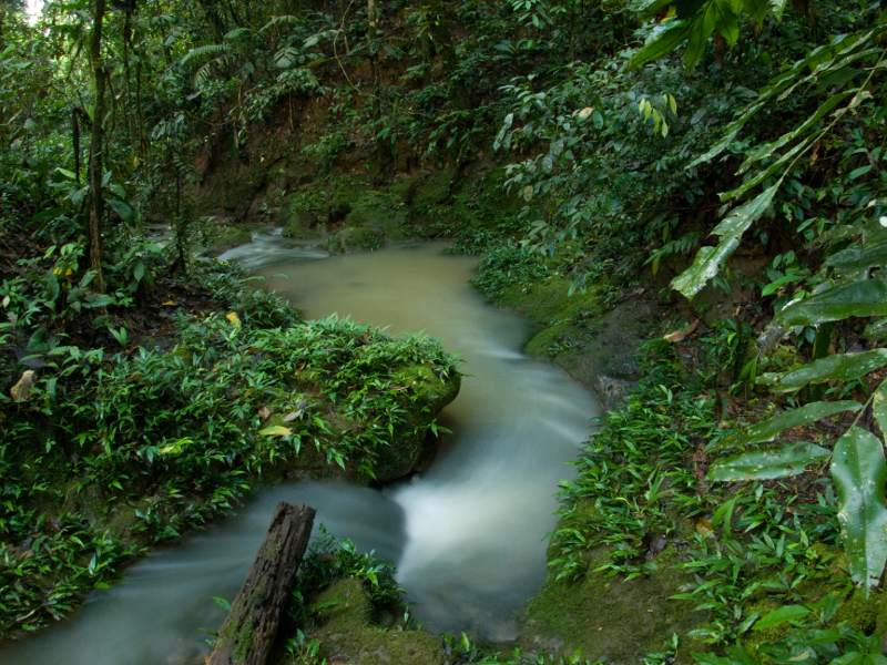 1224-good-news-for-yasuni-park-and-indigenous-rights.jpg