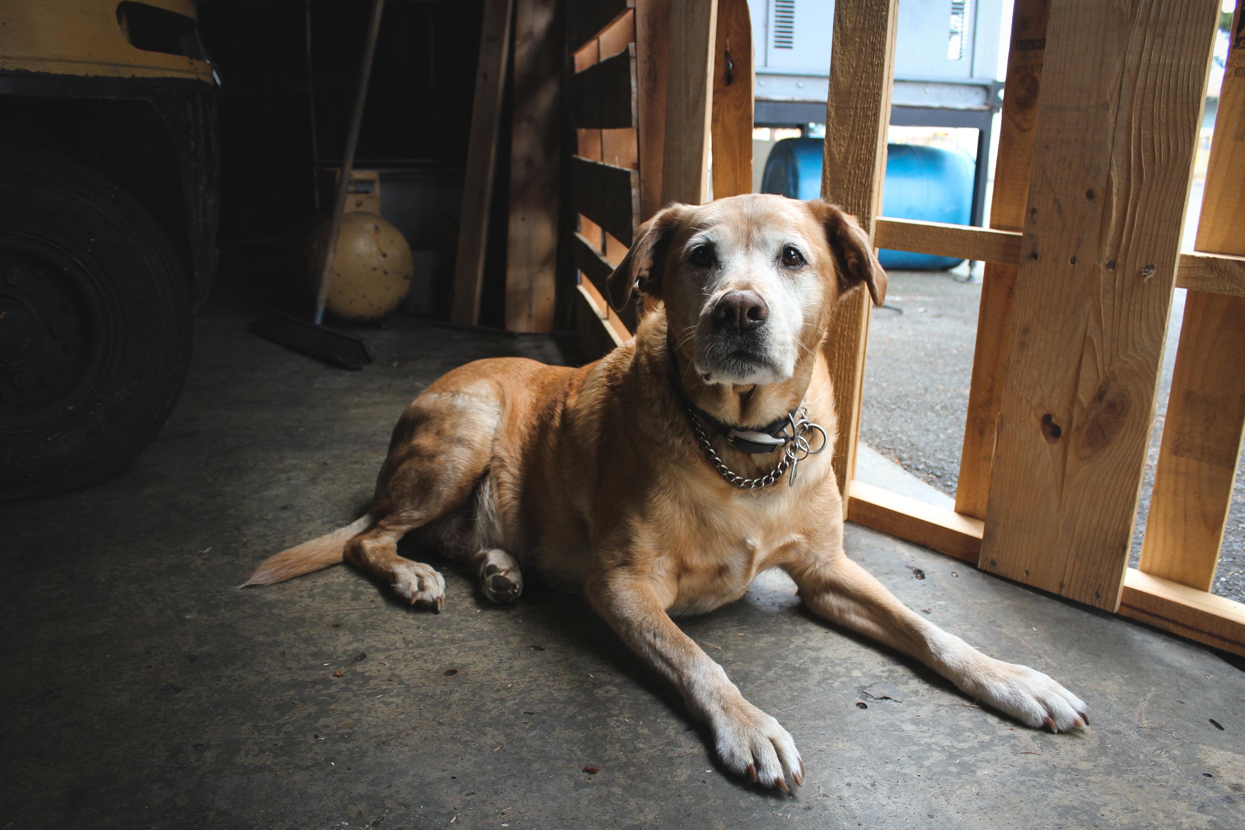 Hank, aka Bad Dog