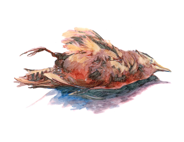 Bird Clean copy 2.jpg