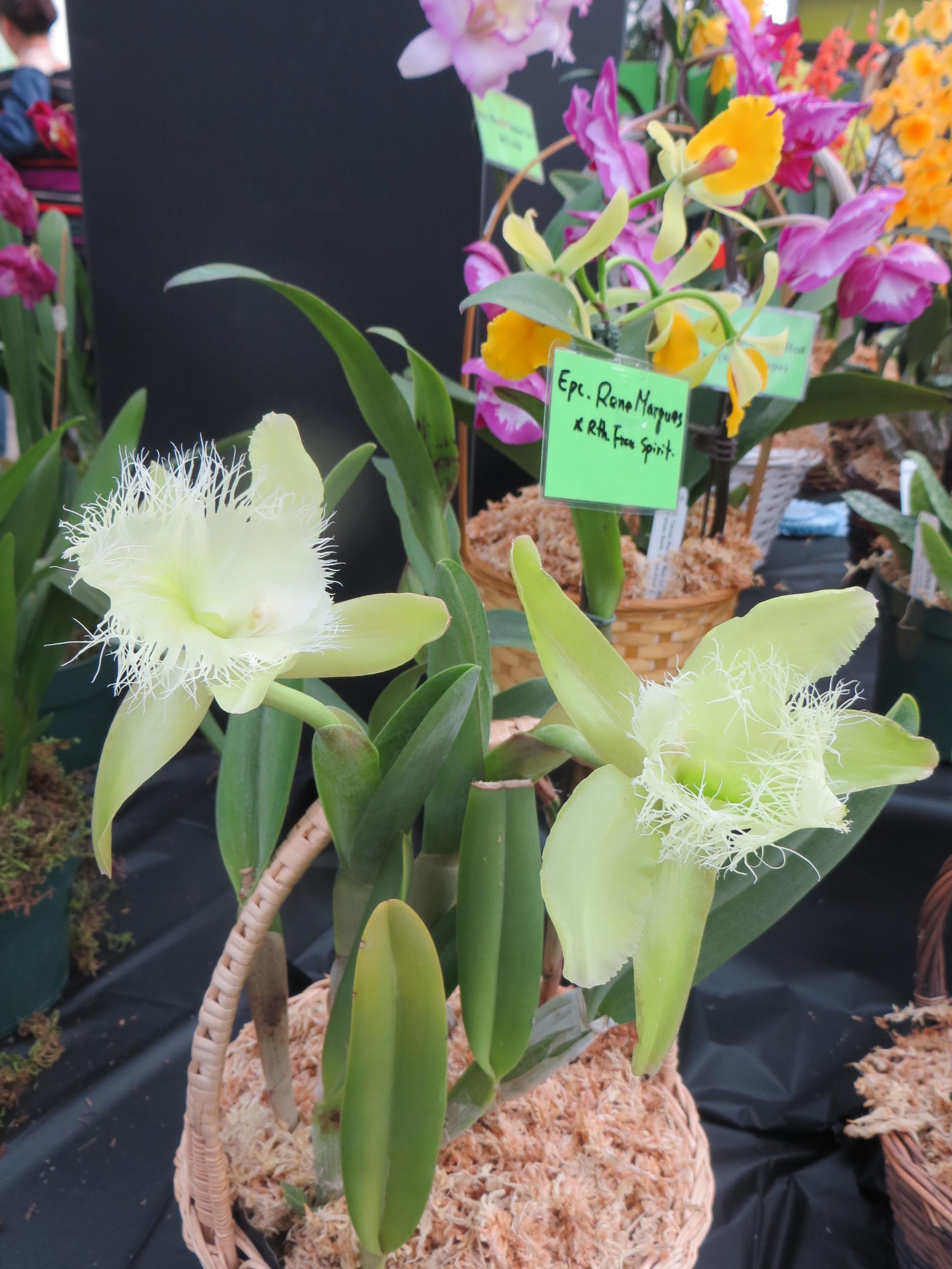 alterta orchid2014 053.JPG